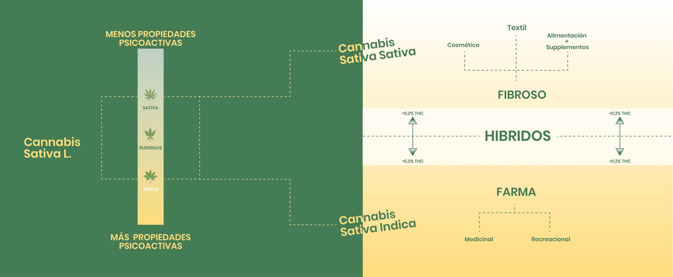 Grafico de los sativa, indica, ruderalis e hidridos